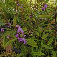 NURSERY NATIVE PLANTS